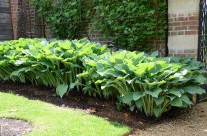 麻生恵 ガーデンデザイナー 世界で一番完璧な多年草