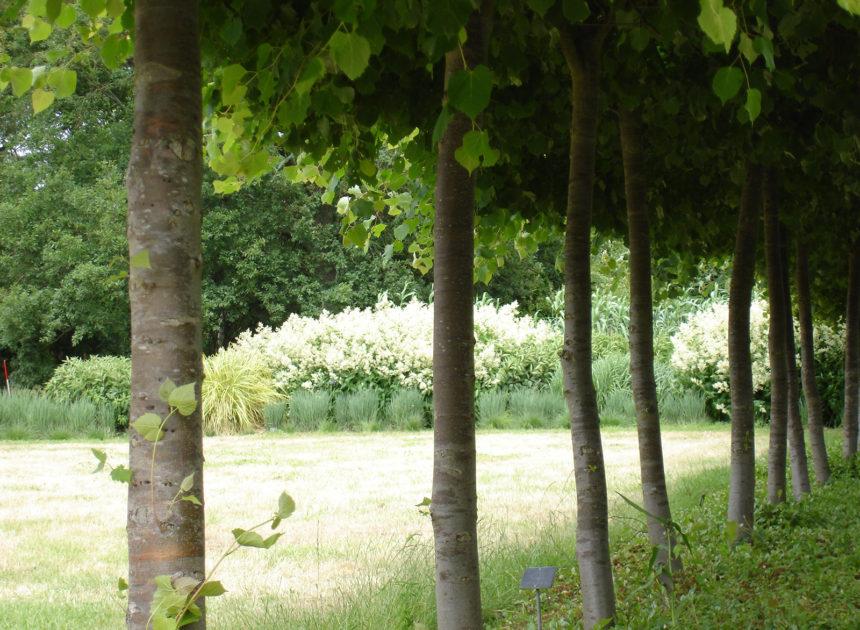 木で隠す 木で魅せる