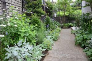 麻生恵 ガーデンデザイナー
